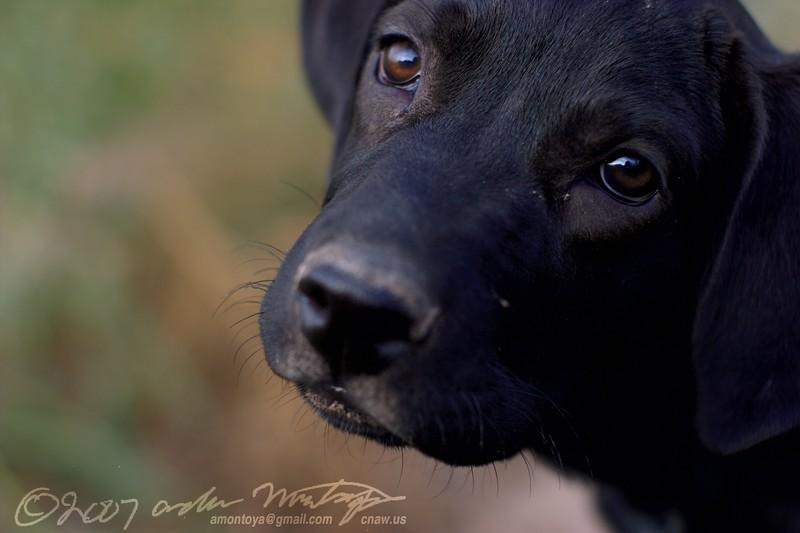 I'm a poor puppy...give me treats!