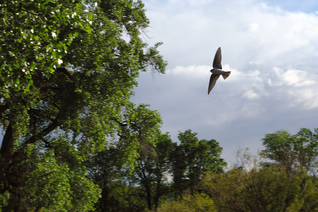 Bird in Flight after Storm