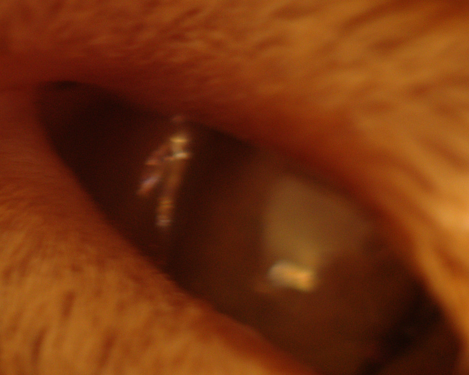 <h1><center> Interesting blurry reflection in my cats eye</center></h1>  By law, anything slightly interesting in a cats eye must be blurry.  To keep the uppity crackpots down. ;-)