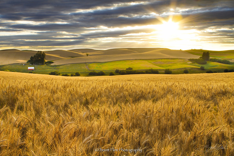 DF.3097 - Palouse sunset, Whitman County, WA.