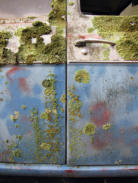 Lichen on a two-tone car, Koorawatha 2009–40 x 30cm
