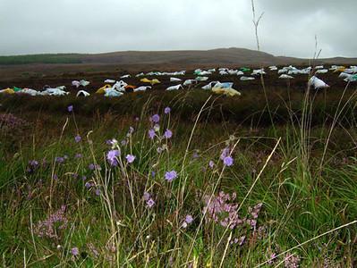 Peat field, Ireland 2004–28 x 38cm