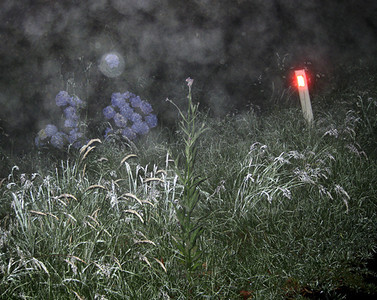 Evening dew, Robertson 2009–28 x 35cm