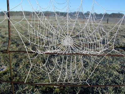 Frozen cobweb, Bungendore 2003–30 x 40cm