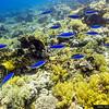 Jackson Reef