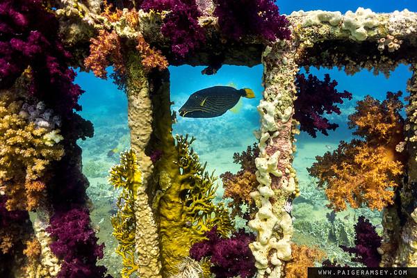 2016 Shark and Yolanda, Sharm El Sheikh - Egypt  26 April