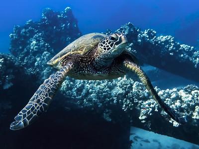Turtle Look