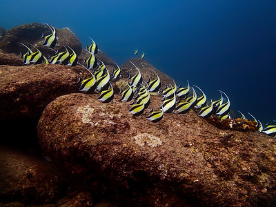 Reef Stripes