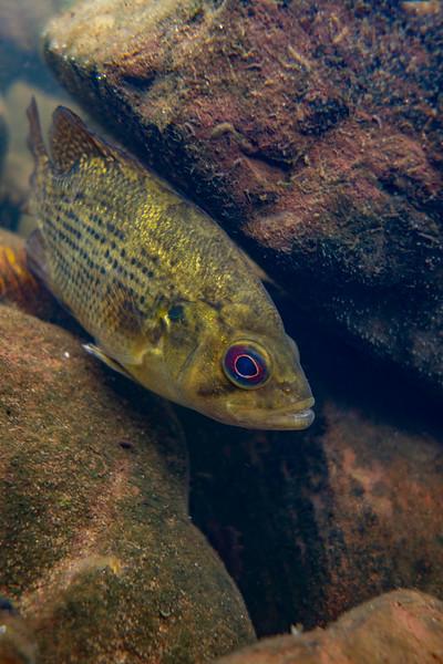 """""""Rock Bass"""" by Kaden, 17     Under the Surface 2021"""