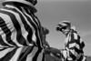 1995_Stripes_K