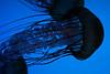 Undersea World : 3 galleries with 89 photos