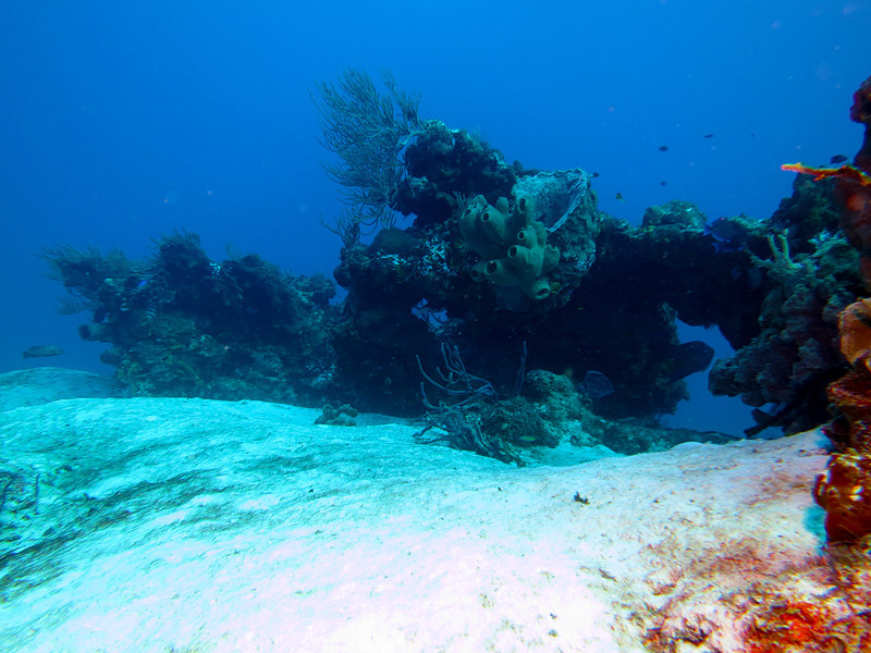 Coral Heads - Palancar