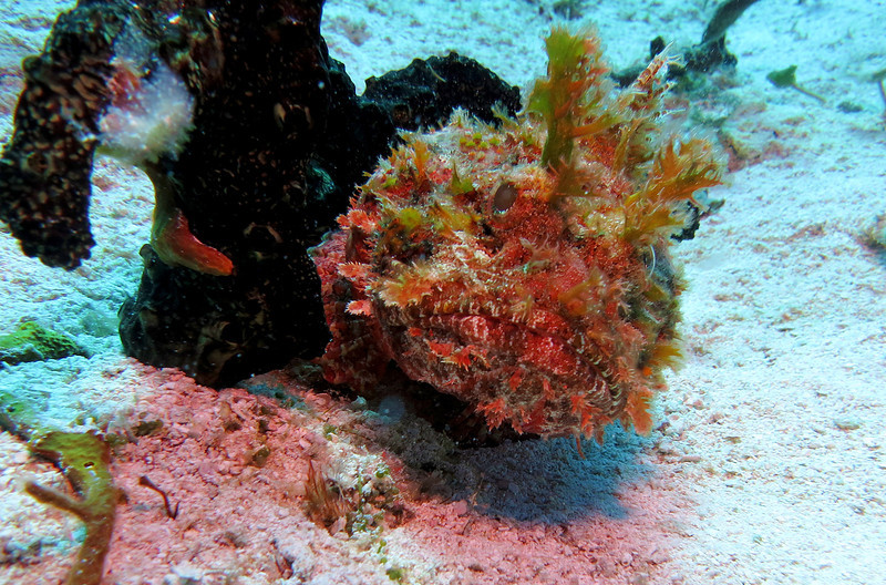 Scorpion Fish - Im with the government