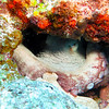 Octopus in a hole