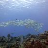 Paradise Dive Site-Cozumel 061213