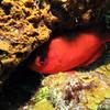 Camera shy BigEye Squirrel fish - ChankanaabReef
