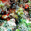 Can you see the Scorpian Fish