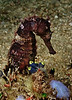 Seahorse, Delaruan dive site