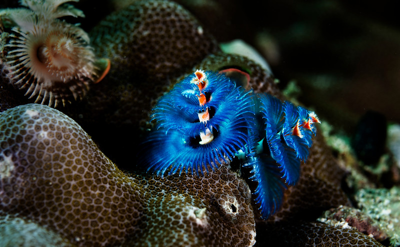 Colorful Christmas tree worms