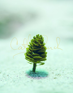 Pine Tree in Sand