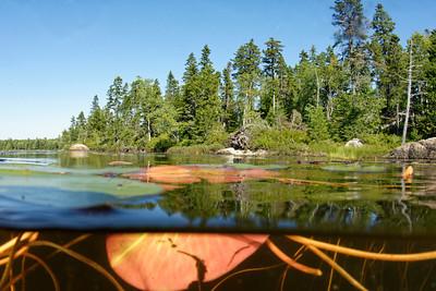 Pond lily pad underwater Acadian Forest over-under over under split
