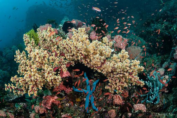 Anilao Reef Scenic  DWA_5456