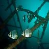 Batfish on wreck at 80 ft.