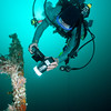 Diver photographing Frogfish