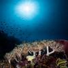 Leaf Scorpionfish  _D852058