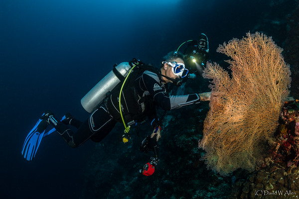 Diver and Fan Coral   _D852384-Edit
