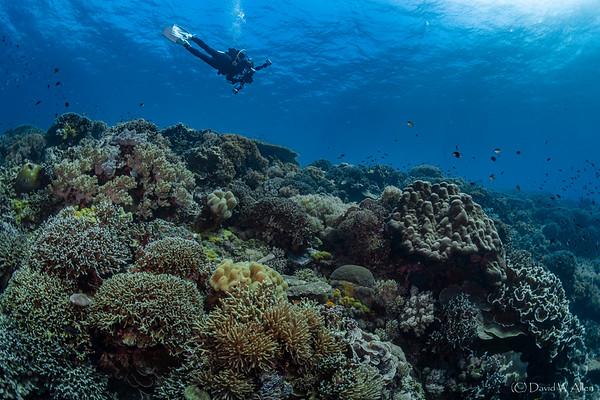 Apo Island Reef Scenic  _D852818