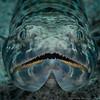 Sand Diver   _D754586