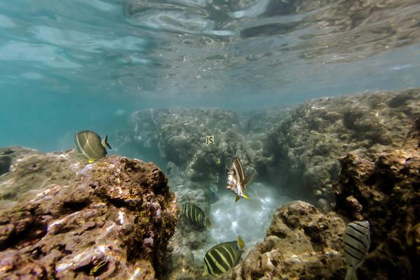 Underwater Photography Pics