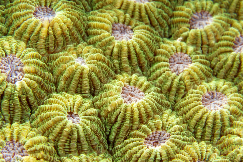 Abstract image of hard coral detail.