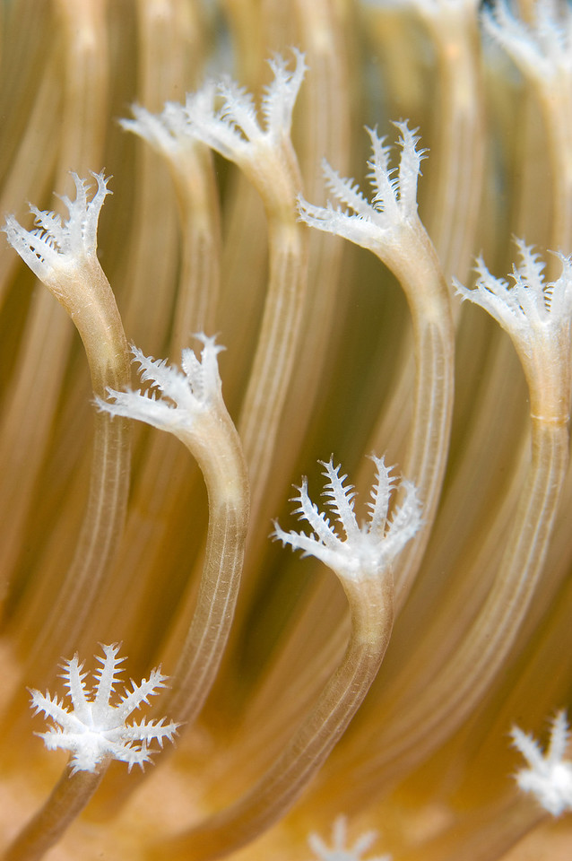 Close up of soft coral polyps.