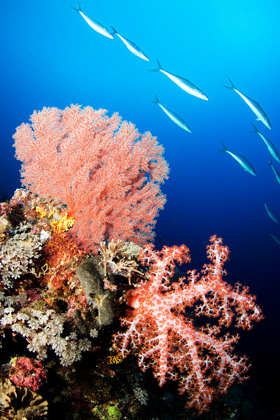 A reef scene with fish in the background.