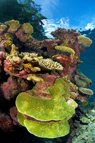 A reef scene.
