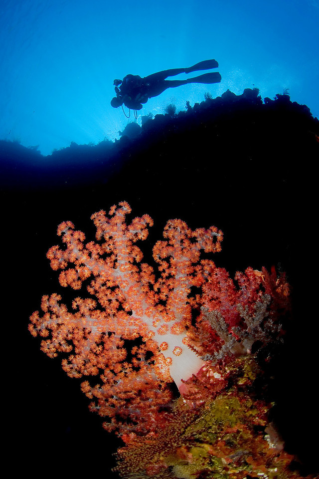 A diver on top of the reef.