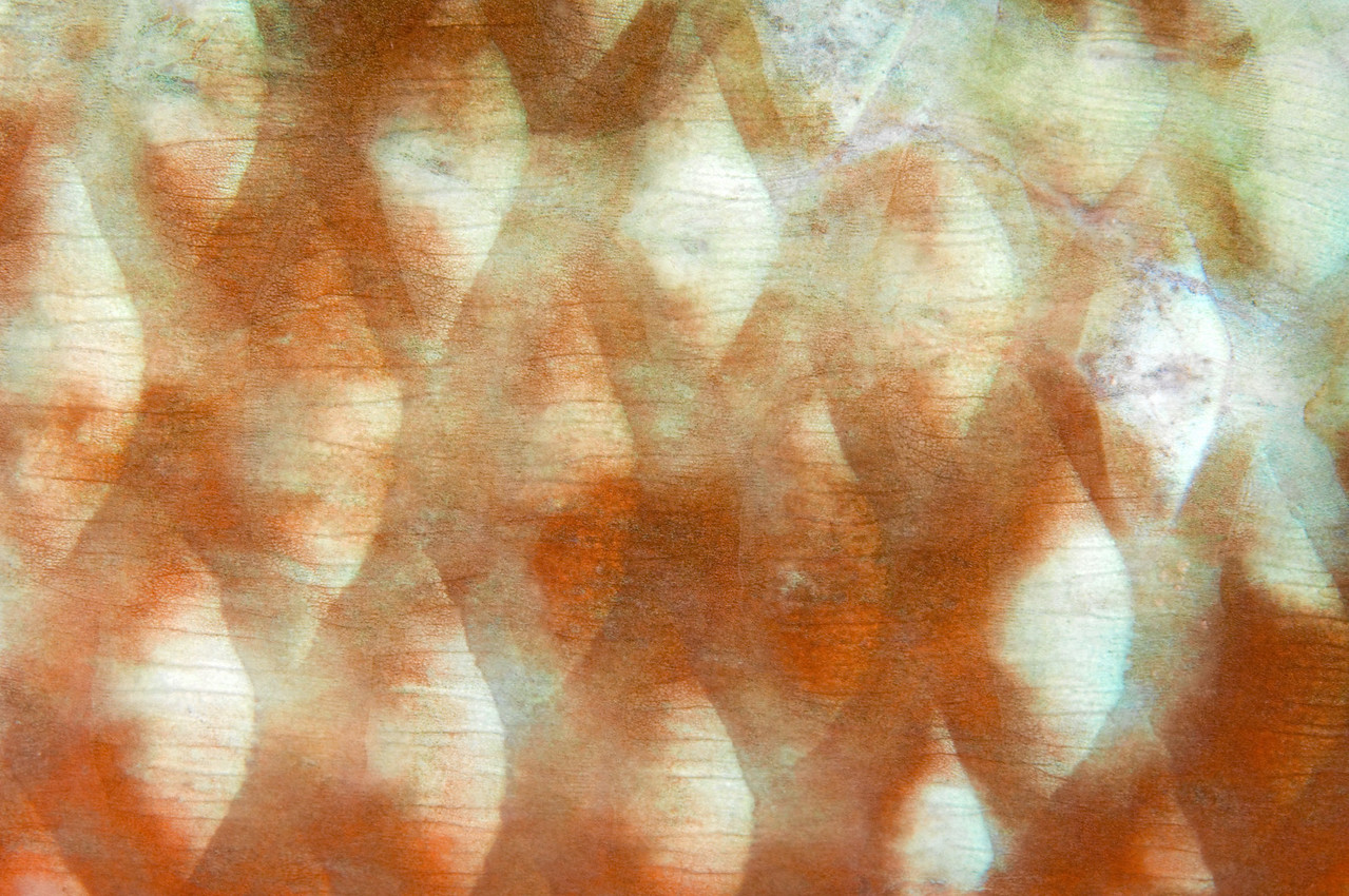 Abstract image of fish scales.