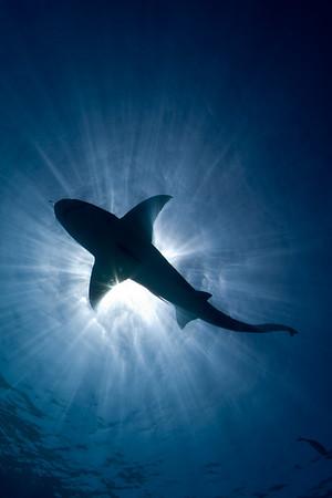 No way out, a shark circles above us
