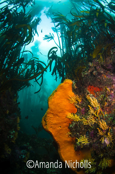 Sponges and Kelp