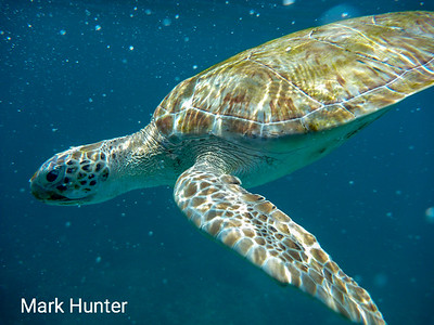 Green Turtle Swimming Through the Cloud