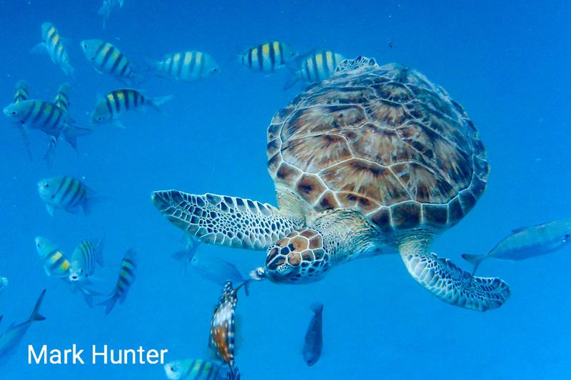 Turning Turtle