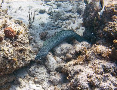 Bahamas Scuba March 2018