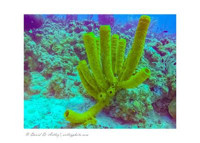 Sponge, West End, Grand Cayman Island