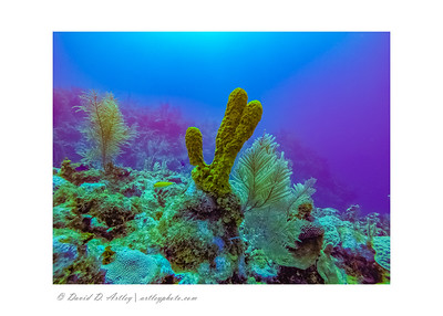Reef Scene with sponge and sea plumes, East End, Grand Cayman Island