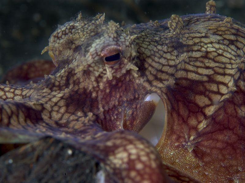 Octopus portrait.