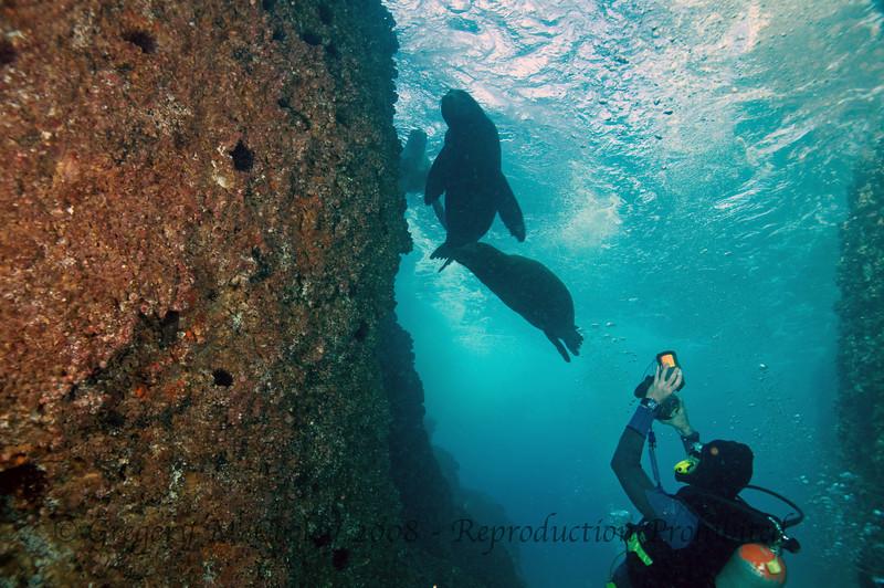 Diving Land's End at Cabo San Lucas, Mexico with Amigos del Mar.