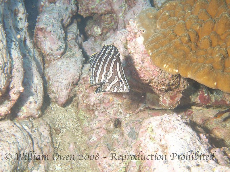 Aquarium_Socorro (6)