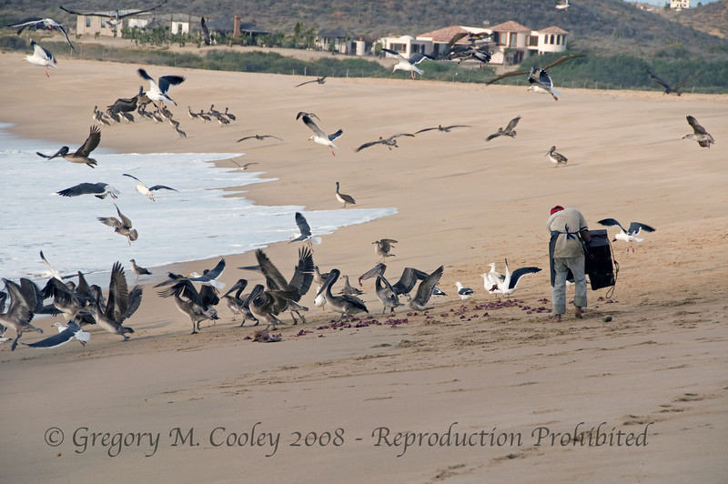 The fishermen clean their catch and then throw the remains on the beach and into the water.  What the birds (pelican, sea gulls, buzzards and others) don't eat will be consumed by crabs and other creatures.
